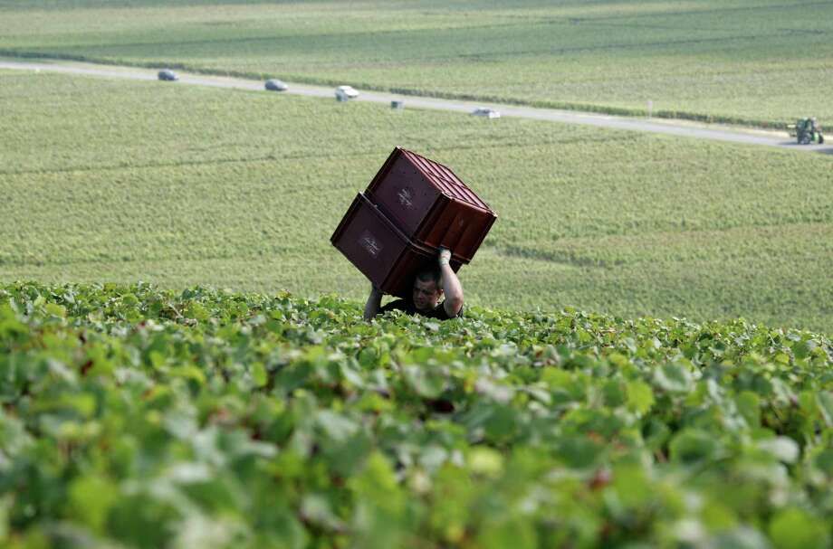 In this file photo, a worker carries boxes during grape harvest near Epernay, Champagne region. Europeans are finding fewer reasons to pop open a bottle of Champagne as another year of economic troubles and high unemployment saps the region's joie de vivre, latest industry figures show. But while a taste for a glass of bubbly might be on the wane in Europe, other markets, particularly Japan and the United States, are developing a growing taste for sparkling luxury with a brand name. Photo: Francois Mori, Associated Press / Associated Press