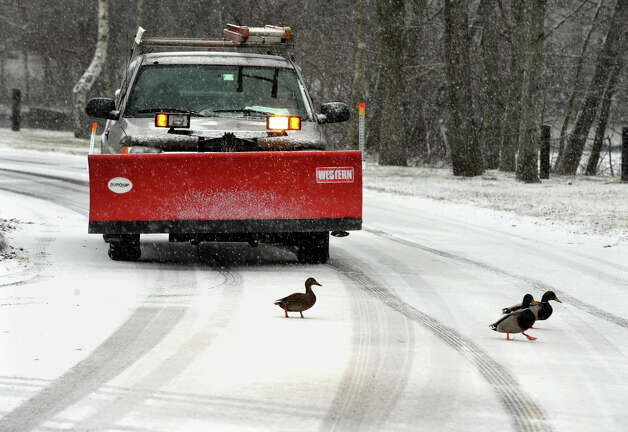A vehicle equiped for today's snow waits paitiently for some ducks to cross the road in Veterans Park in Trumbull, Conn. on Saturday December 29, 2012. Photo: Christian Abraham / Connecticut Post