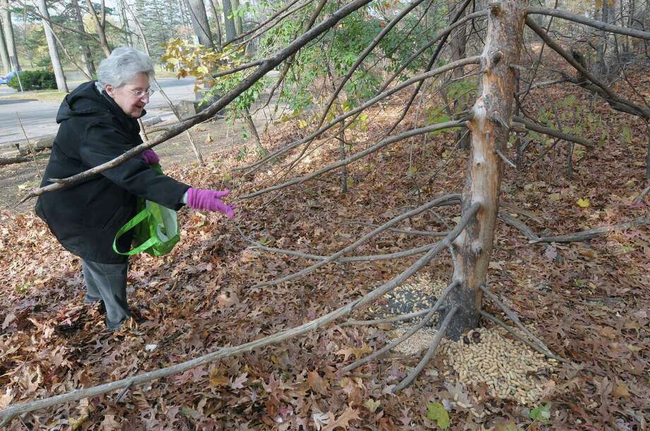 Marilynn Coutant from Schenectady throws out nuts to feed the squirrels in a section of Central Park on Tuesday, Nov. 20, 2012 in Schenectady, NY.  Coutant helps out  Marilyn Dagostino who also feeds the animals.  (Paul Buckowski / Times Union) Photo: Paul Buckowski  / 00020145A