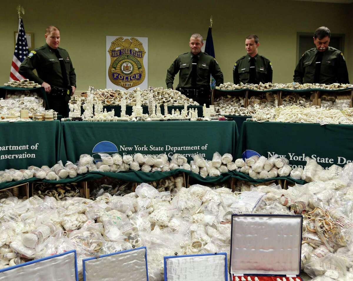 In this Dec. 14, 2012 photo, officers at the New York State Department of Environmental Conservation in Albany, N.Y., stand behind recently confiscated ivory items that were for sale or passed through New York City, a primary black market for the ongoing African slaughter of the world?'s largest land mammals. From left are officers Nathan Favreau, Neil Stevens, Brent Wilson and Peter Fanelli. (AP Photo/Mike Groll)