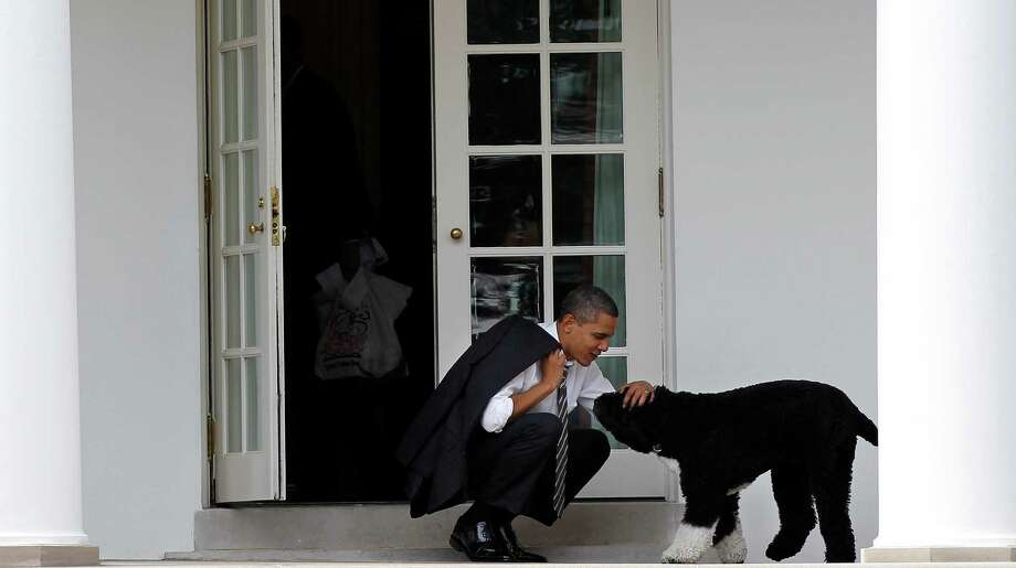 In this March 15, 2012 file photo, President Barack Obama pets the family dog Bo, a Portuguese water dog, outside the Oval Office of the White House in Washington. Photo: Pablo Martinez Monsivais, ASSOCIATED PRESS / The Associated Press2012