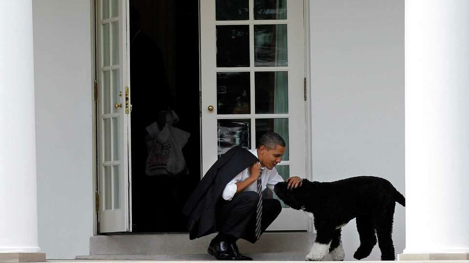 In this March 15, 2012 file photo, President Barack Obama pets the family dog Bo, a Portuguese water