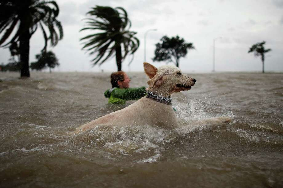 Ruffin Henry and Scout the dog swim in the rising water of Lake Pontchartrain as Hurricane Isaac approaches on August 28, 2012 in New Orleans, Louisiana.  Hurricane Isaac is expected to make landfall later today along the Lousiana coast. Photo: Chris Graythen, Getty Images / 2012 Getty Images