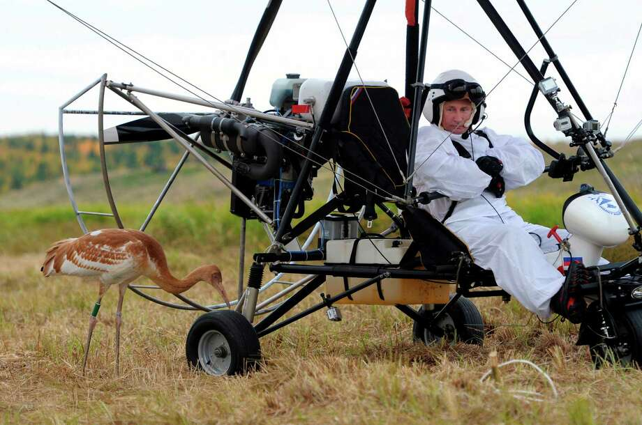 In this Sept. 5, 2012 file photo, Russian President Vladimir Putin waits in a motorized hang glider next to a Siberian white crane, on the Yamal Peninsula, in Russia. Putin took part in a flight as part of a program devised by environmentalists to lead the endangered cranes, which were raised in captivity, on their migration to Asia. Photo: Alexei Druzhinin, ASSOCIATED PRESS / ??? ???????2012