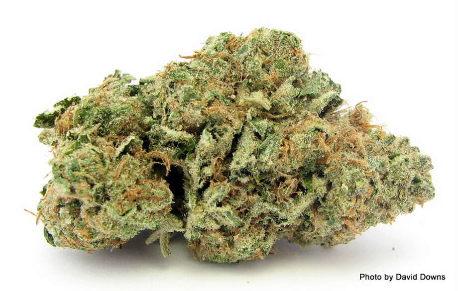 8) GIRL SCOUT COOOKIESPopularized by S.F. rapper Berner, Girl Scout Cookies has taken the West Coast by storm - mixing up OG Kush, Cherry Pie and Durban Poison to create a multi-colored, minty/earthy-smelling monster with a profound sedative effect. (David Downs / David Downs) Photo: Picasa