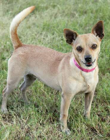 Riddick Photo: Courtesy, San Antonio Humane Society / San Antonio Express-News