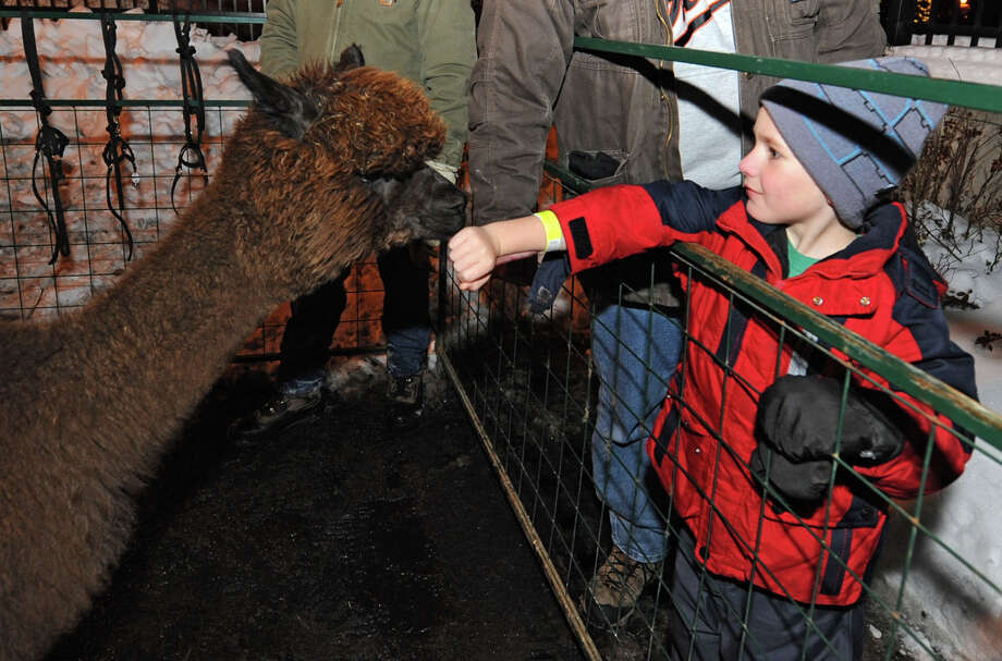 Wesley Price, age 6, greets an Alpaca from Breezy Hill Ranch during First Night Saratoga on Monday Dec. 31, 2012 in Saratoga Springs, N.Y. (Lori Van Buren / Times Union) Photo: Lori Van Buren