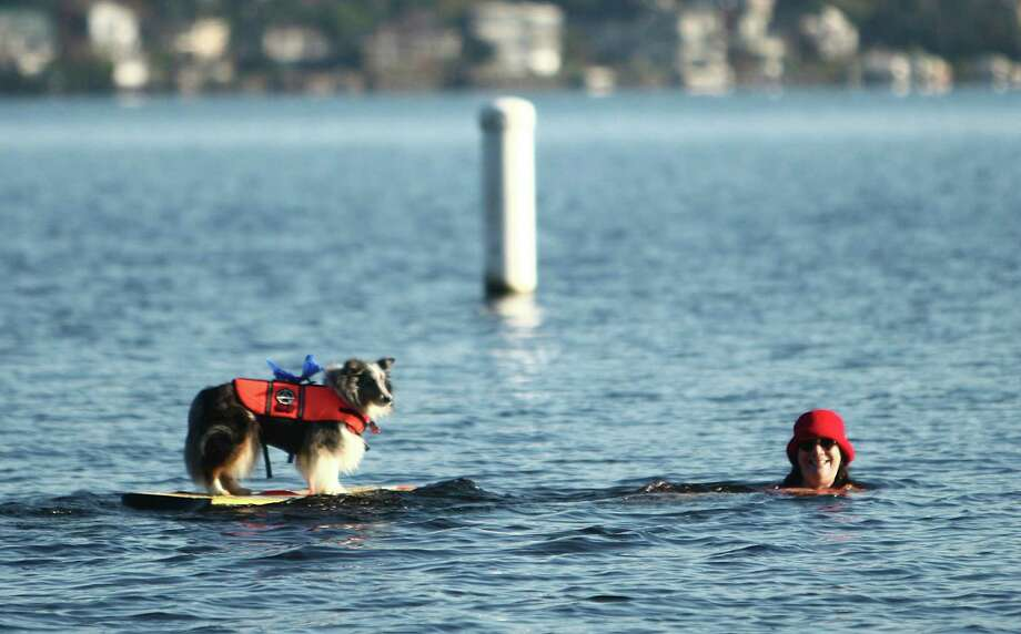 A dog hangs out offshore during the 11th annual Polar Bear Plunge. Photo: JOSHUA TRUJILLO / SEATTLEPI.COM