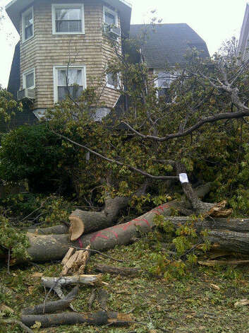 A fallen tree in Brooklyn on Nov. 1.