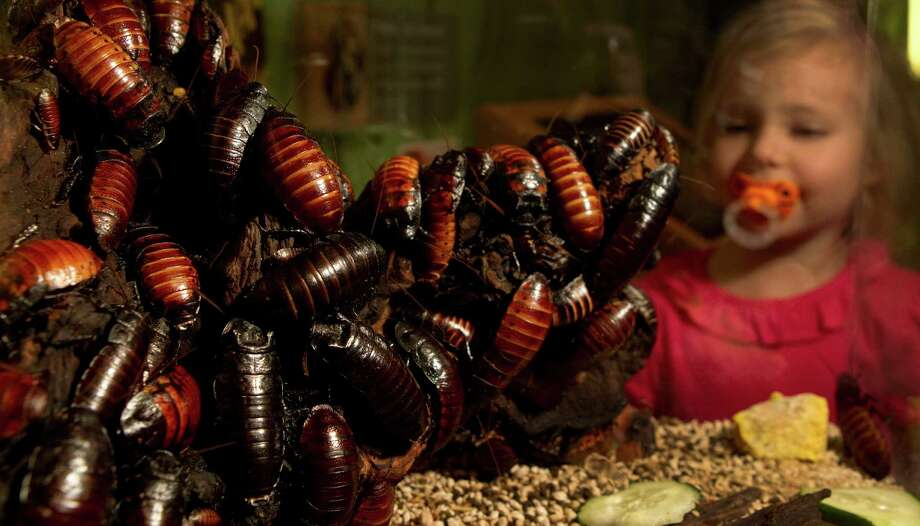 Priscilla Breitbeil, 4,