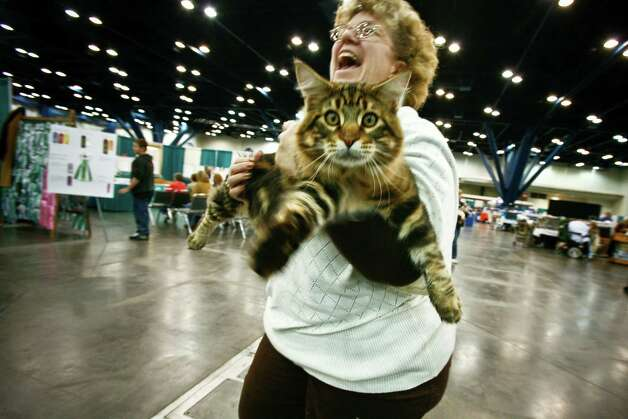 Donna Ensor holds her 10-month-old, 16-pound, Mancoon cat named Kasper before the start of the Houston Cat Club 58th Annual Charity Cat Show at the George R. Brown Convention Center Saturday, Jan. 9, 2010. Photo: Michael Paulsen, Houston Chronicle / Houston Chronicle