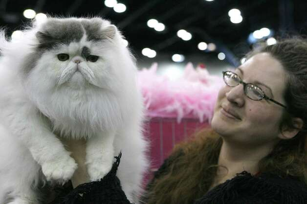 "Carissa Altschul from Arlington holds her Blue and White Persian  cat ""Cacao Dasson's Creek"" at the Houston Cat Club's 56th Annual Charity Cat Show in 2008.  Photo: Steve Campbell, Houston Chronicle / Houston Chronicle"