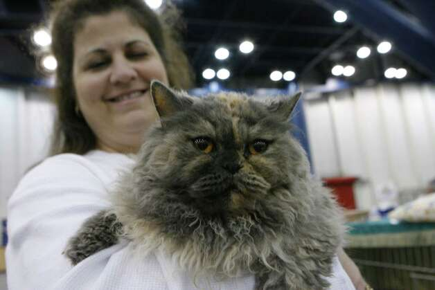 "Cheryl Gray of Havana, Ark. holds her Selkirk Rex named ""Zoe"" at the Houston Cat Club's 56th Annual Charity Cat Show in 2008. Photo: Steve Campbell, Houston Chronicle / Houston Chronicle"