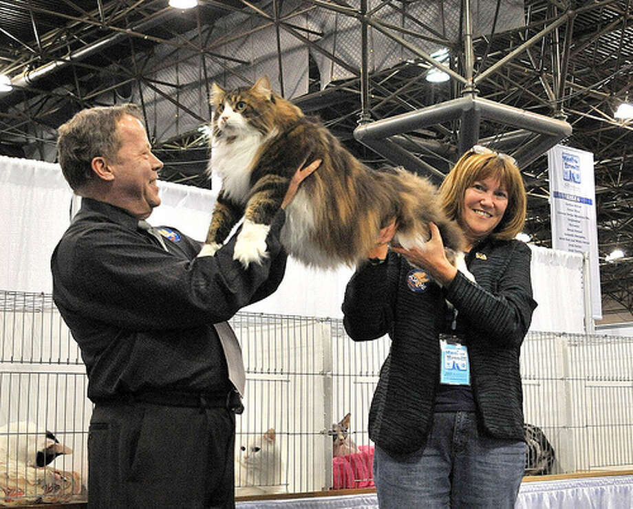 Cat show judge Wayne Trevathan of Florida and cat owner Donna Hinton of Richmond show off Walker, a prize-winning Maine Coon. Photo: Mary Kolencik