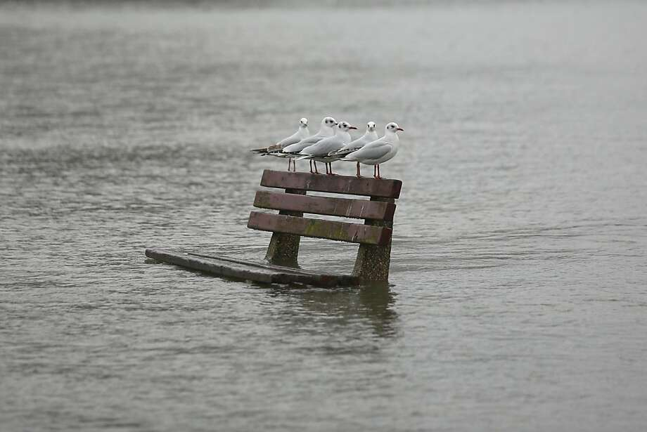 Seat taken: A bench along the flooding River Thames in Pangbourne, England, provides a resting spot for birds of a feather. Photo: Oli Scarff, Getty Images