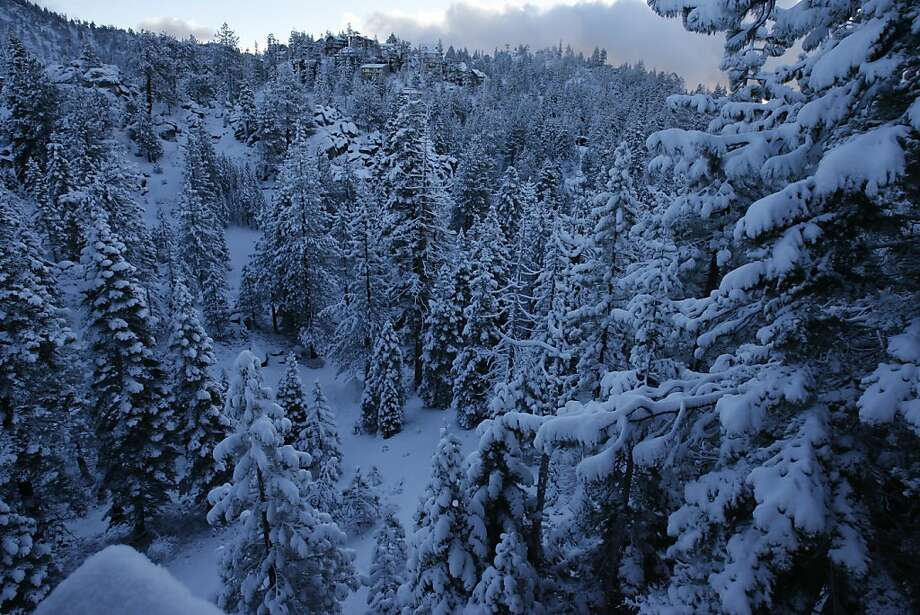 Snow blankets trees in the Sierra. Photo: Eric Luse, SFC