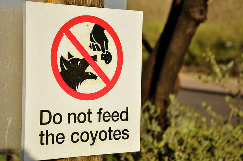 Coyotes are opportunistic diners and express a wide variety in what they eat, from watermelons to chickens to sunflower seeds to rabbits. (Kansas Deparment of Wildlife Parks and Tourism)Arizona sign photo by Kevin Cochran/Flickr Creative Commons