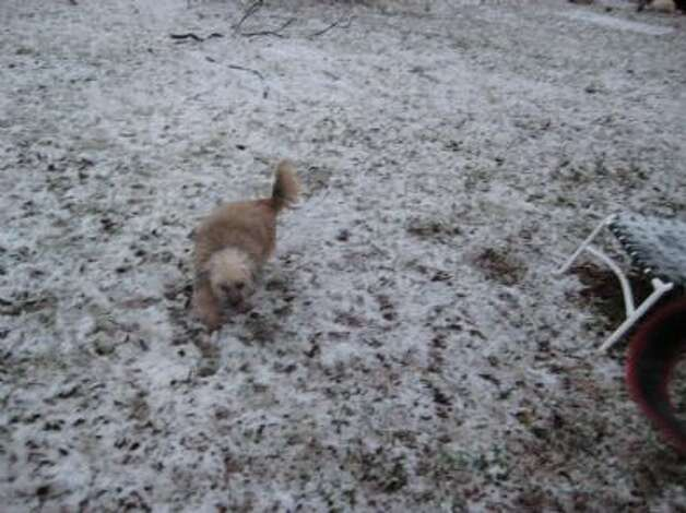 mySA reader Gabi shares photos of the snow at her Kerrville home, Jan. 4, 2013. Photo: Courtesy Photo