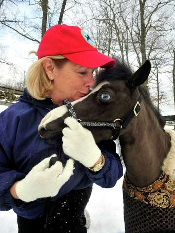 Therapy volunteer Sally Anfinsen cuddles with Magic, one of the Gentle Carousel Miniature Therapy Horses visiting The Ridge Equestrian Center in Newtown Friday, Jan. 4, 2012. Photo: Michael Duffy / The News-Times