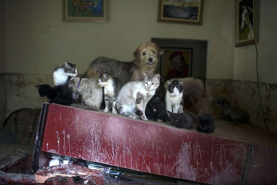 It's raining cats and dogs near Rio: At least nine felines huddle with a pooch on a piece of