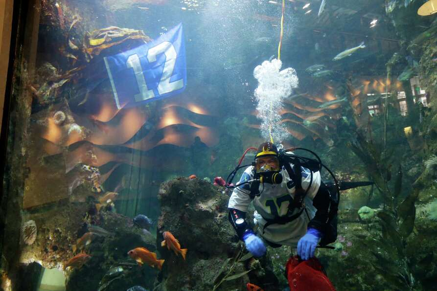 Alex Tanz, a diver at the Seattle Aquarium, wears a Seahawks jersey, Friday, as he swims near a