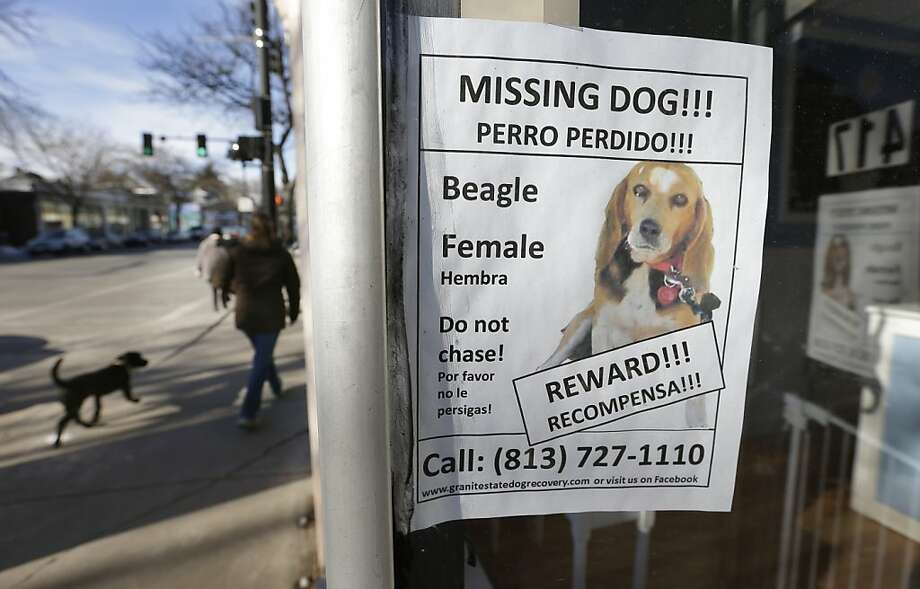 A poster for the missing dog, a beagle named Tessa, is posted in a shop window in Brookline, Mass. Photo: Steven Senne, Associated Press
