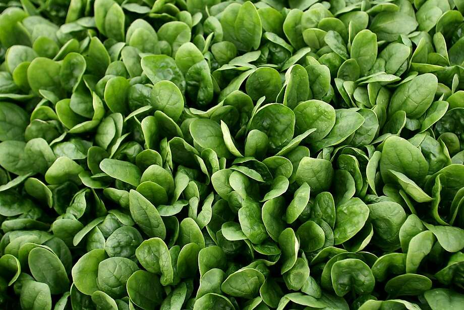 California spinach was identified as the culprit in a fatal 2006 outbreak of E. coli. Photo: David Royal, AP