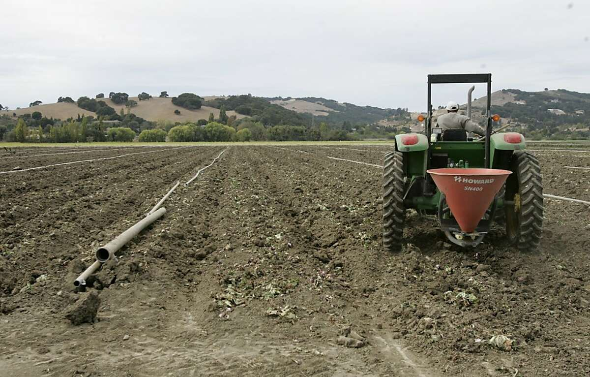 A tractor seeds a freshly plowed lettuce field across the street from Earthbound Farm in San Juan Bautista. The FBI and FDA officials raided two produce growers and processing offices Wednesday morning - Growers Express office in Salinas and Earthbound Farms in San Juan Bautista - looking for evidence in connection with the spinach E. coli outbreak. Total reported cases of illness tied to E. coli-contaminated spinach have now reached 192, spread through 26 states and Ontario, Canada. Photo by Michael Maloney / San Francisco Chronicle on 10/4/06 in San Juan Bautista,CA