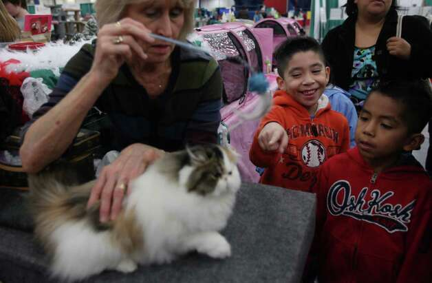 Santiago Lopez, 7, smiles as Irene Allen's cat plays with a feather while he and his brother Sebastian Lopez, 6, take turns petting it during the Houston Cat Club 60th Annual Charity Cat Show at George R. Brown Convention Center on Saturday, Jan. 5, 2013, in Houston. Photo: Mayra Beltran, Houston Chronicle / © 2012 Houston Chronicle
