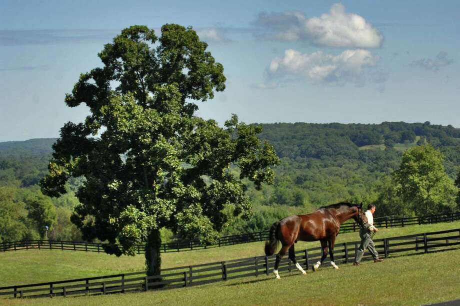 Times Union Staff photograph by Philip Kamrass -- Glenn Epstein, president of Intermagnetics General Corporation, walks with Starman, a 13 year old Irish Sport horse, on his farm in North Chatham, NY on Monday August 27, 2007. Epstein retires from the company in a few days, after the company was sold last year. He intends to remain active in the Capital Region. FOR LARRY RULISON STORY. Photo: PHILIP KAMRASS / ALBANY TIMES UNION