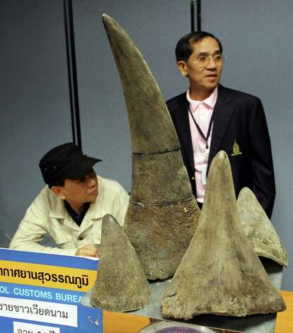 Seized rhino horns are shown with alleged Vietnamese smuggler Pham Quang Loc, 56, left, with Thai Customs Official Uaychai Kultipmontri, right, during a news conference at Suvarnabhumi international airport in Bangkok, Thailand, on Sunday.  Thai Customs officials seized more than half a million US dollars worth of rhino horn hidden inside a souvenir hippo and arrested passenger Pham Quang Loc at the airport earlier Sunday, on arrival in Thailand from Ethiopia.  Sign below reads: Suvarnabhumi passenger control customs bureau. Photo: AP