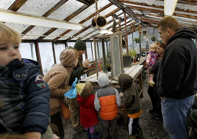 A group of children celebrating a birthday got to observe the chrysalis stage of Monarch's at the greenhouse. At the Ardenwood Historic Farm in Fremont, Calif. hundreds of mysterious wintering Monarch butterflies are coping with a cold winter Sunday January 6, 2013. Photo: Brant Ward, The Chronicle