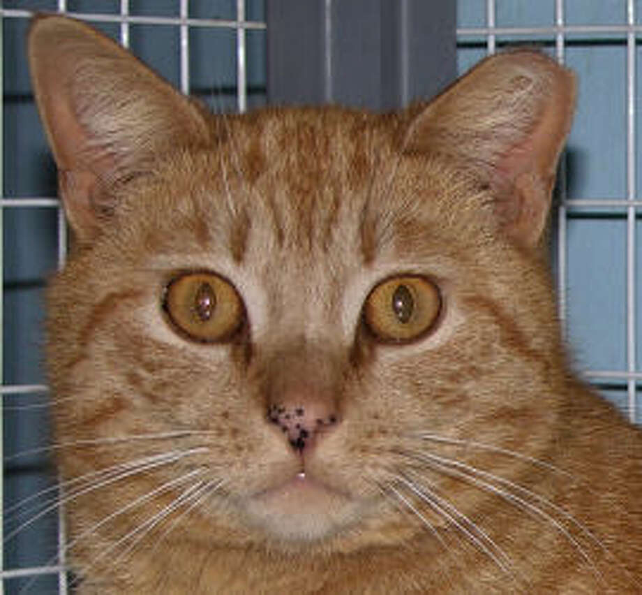 Rusty is a loving and playful adult male, with cute little freckles on his nose. (Mary Lou Baker)