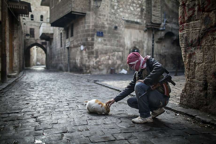 Pro-cat faction: A Free Syrian Army fighter feeds bread to a hungry feline in the old city of Aleppo. Photo: Andoni Lubaki, Associated Press