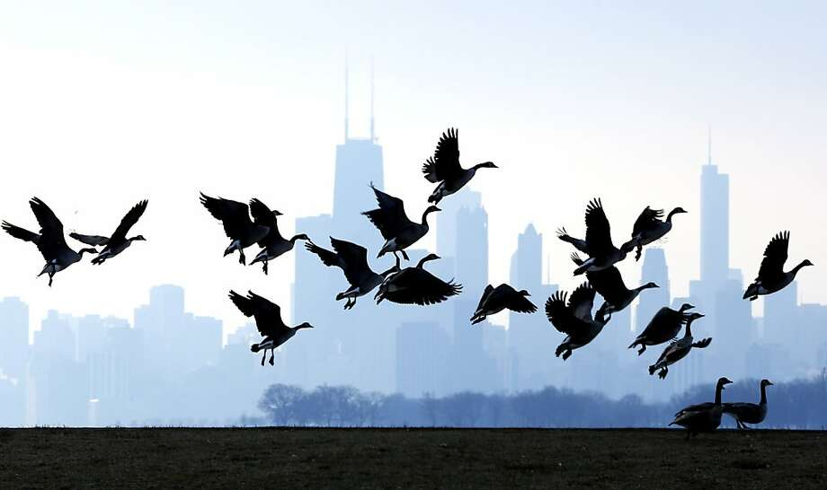Geese fly over Lake Michigan at Montrose Beach in Chicago, Sunday, Jan. 6, 2013. A cool weekend is expected to be followed by warming weather. Photo: Nam Y. Huh, Associated Press