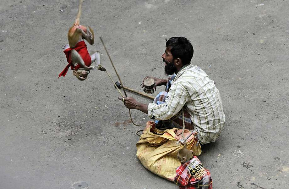 A monkey somersaults at the command of its owner, a street person in Kolkata. Photo: Bikas Das, Associated Press