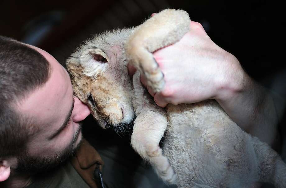 Are you addicted to huffing baby lions? Sure, it looks like fun now, but doing nose hits off lion cubs can be hazardous to your health. Especially when the lion gets a little bigger. (Three-week-old cub at the Zorako-Zoo in Gyongyos, Hungary.) Photo: Attila Kisbenedek, AFP/Getty Images