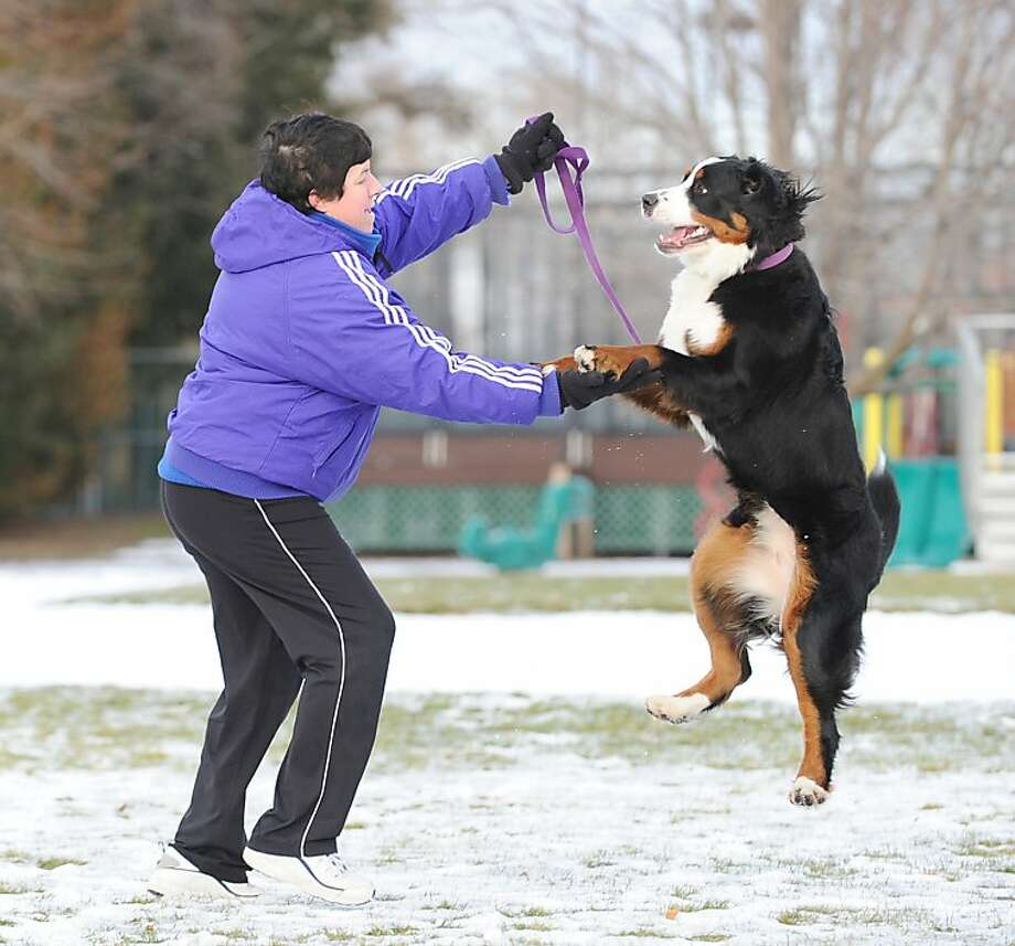 Oh, she'd fly through the air with a great Bernese: Whitney Welch and Cinder hover above snow-covered Loughlin Avenue Park in Cos Cob, Conn. Photo: Bob Luckey, Connecticut Post