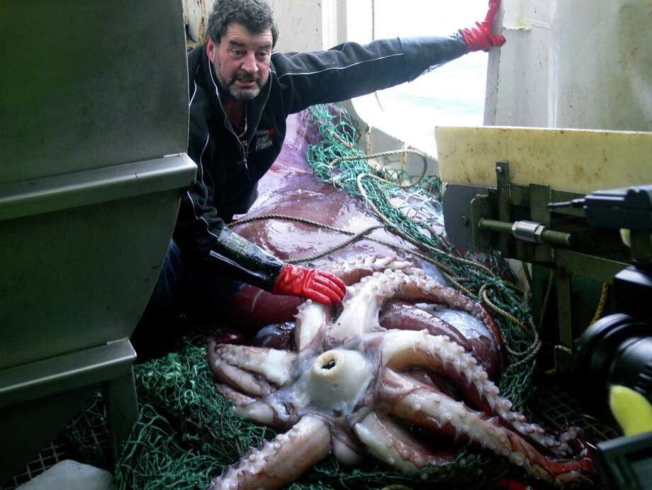 In the handout photo provided by the New Zealand Ministry of Fisheries, Captain John Bennett examines the world's first intact adult male colossal squid (Mesonychoteuthis hamiltoni) on board his New Zealand fishing long-line boat 'San Aspiring' February 22, 2007 in the Ross Sea near Antarctica.The gigantic sea creature is about 10 metres long and weighs a world record 450 kilograms -- about 150 kilograms heavier than the next biggest specimen ever found. The fishing vessel San Aspiring was long lining in the Ross Sea near Antarctica, and the squid was dining on a hooked toothfish when it was hauled from the deep.  (Photo by Ministry of Fisheries via Getty Images) / 2007 New Zealand Ministry of Fisheries