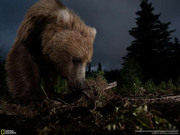 "Honorable mention: ""Ursus arctos horribilis""