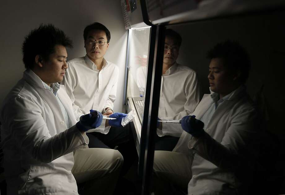 Researchers Andrew Lee (left), a graduate student, and Dr. Joseph Wu study stem cells at the Stanford Cardiovascular Institute. Photo: Michael Macor, The Chronicle
