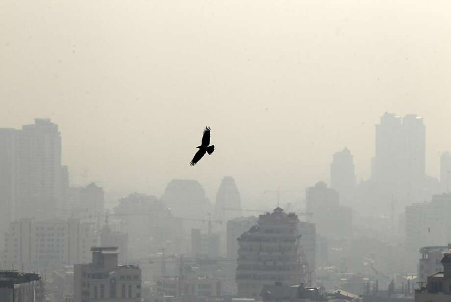 A picture taken on January 7, 2013 shows a bird flying in front of buildings in the polluted skyline of the Iranian capital Tehran. Air pollution in Tehran has left 4,460 people dead in a year, an Iranian health official said in reports Sunday, with another sounding the alarm over high dose of carcinogens in domestically-made petrol. Photo: Atta Kenare, AFP/Getty Images