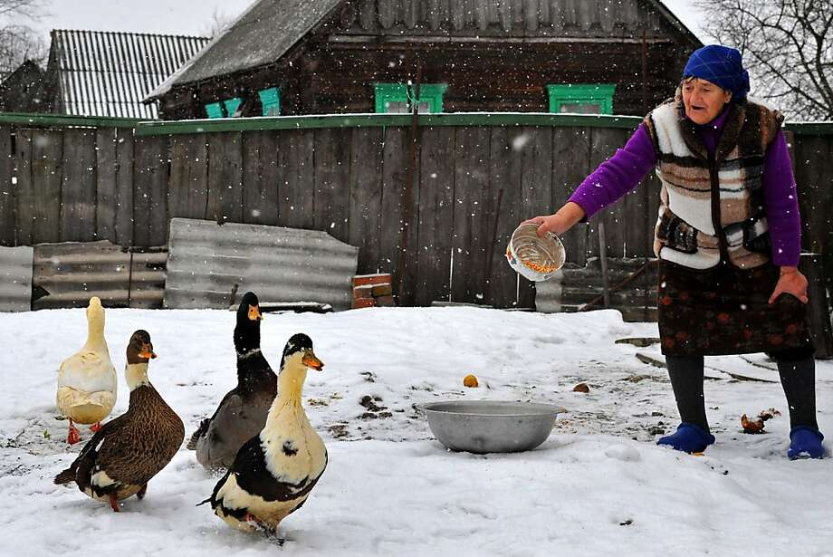 Come and get it!A farm woman feeds her geese in the village of Pererov, Belarus. Photo: Viktor Drachev, AFP/Getty Images