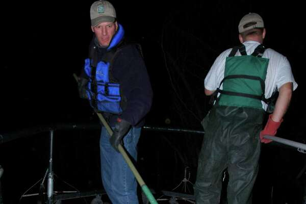 TPWD Inland Fisheries biologists collect and measure fish from reservoirs using electrofishing at night, when fish tend to be in shallow water and close to shore.  Photo by Larry D. Hodge, TPWD