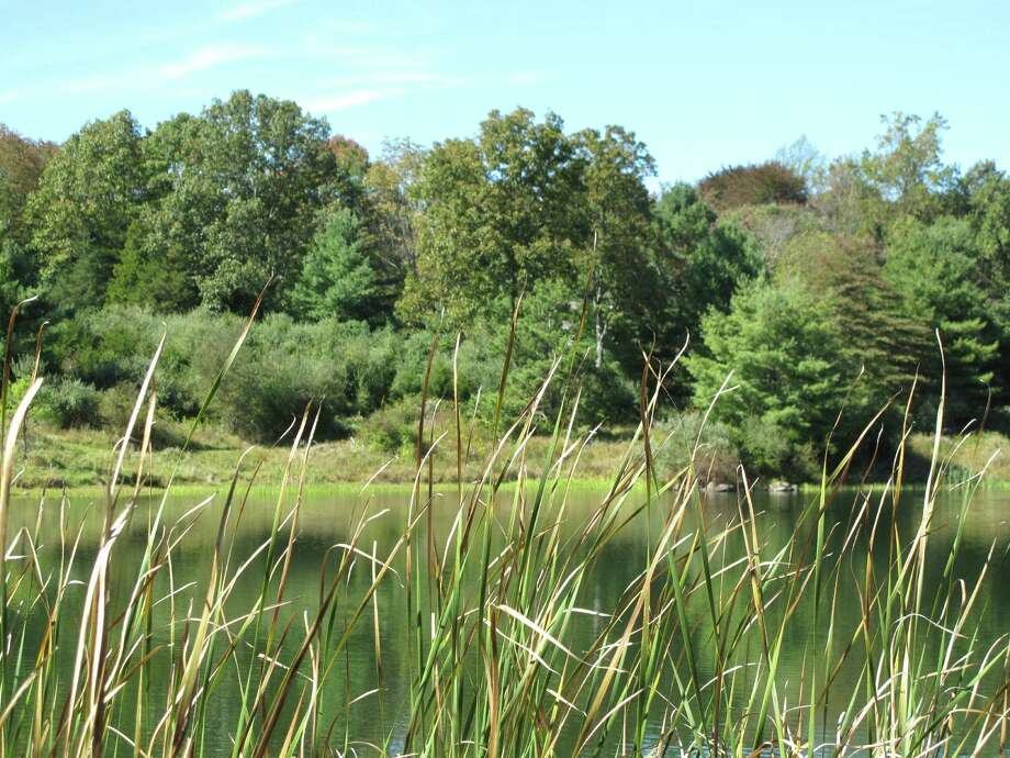 The pond at Grace Farms. Verizon proposes building a 125-foot cell phone tower on the 82 Puddin Hill Road property that Grace Farms wraps around. Photo taken Oct. 1, 2012. Photo: Tyler Woods