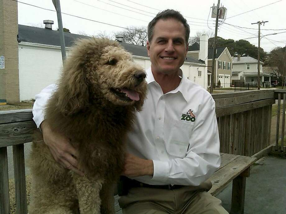 Escaped 'lion' identified:After a 911 caller reported a lion on the loose in Norfolk, Va., police called the Virginia Zoo to make sure all predatory African cats were accounted for. They were. It seems the concerned citizen mistook an off-leash Labradoodle with an unusual haircut for the king of the jungle. Here, zoo executive director Greg Brockheim poses with  the scary beast, named Charles the Monarch. Photo: Uncredited, Associated Press