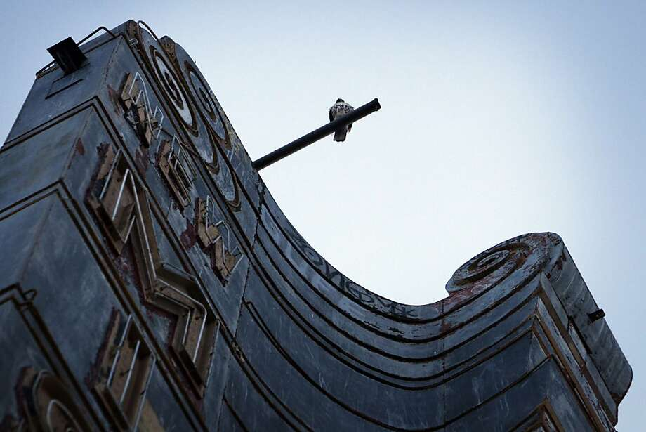 A bird sits atop the sign of the New Mission Theater. Photo: Carlos Avila Gonzalez, The Chronicle