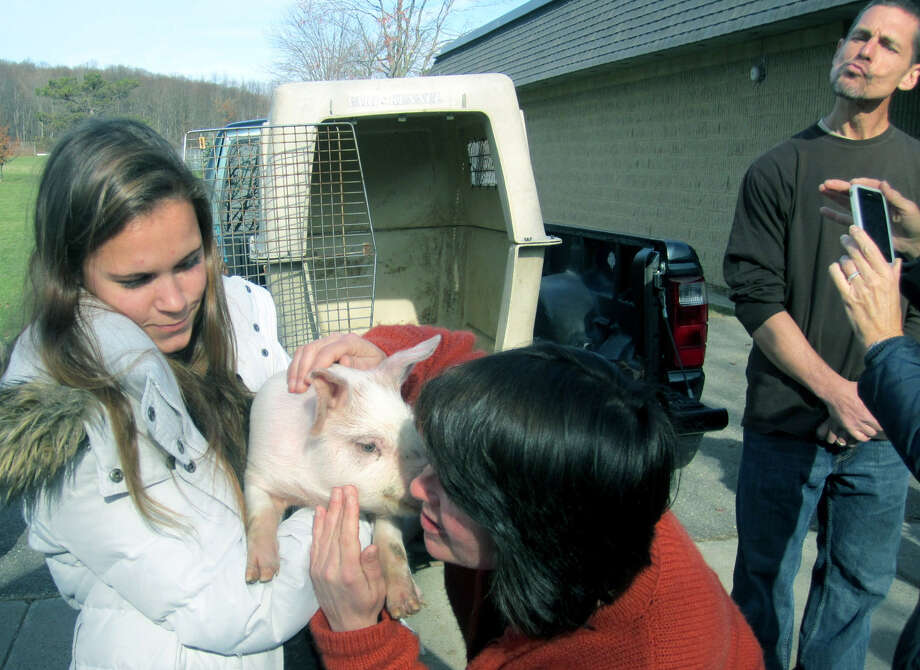 Bridget McCarthy's Kiss the Pig benefit swings into action as Shepaug middle school teacher Marianne Maher receives a smooch from Baby Porks the pig as fellow faculty member Tom Scarola, back right, appears to be practicing for his turn, November 2012  Courtesy of Cindy Koslosky Photo: Contributed Photo