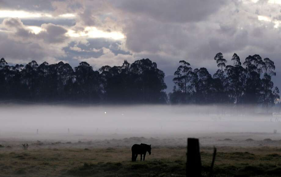 A horse grazes in a pasture in early morning fog caused by frost-producing overnight temperatures in Chia, on the outskirts of Bogota, Colombia, Wednesday, Jan. 9, 2013. In Colombia's highlands, crops are prone to freeze damage in the first few months of the year when temperatures are high during the day but drop below zero at night. Photo: Fernando Vergara, Associated Press