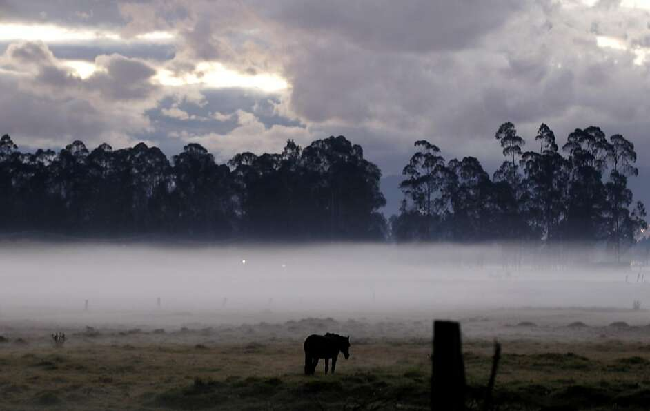 A horse grazes in a pasture in early morning fog caused by frost-producing overnight temperatures in
